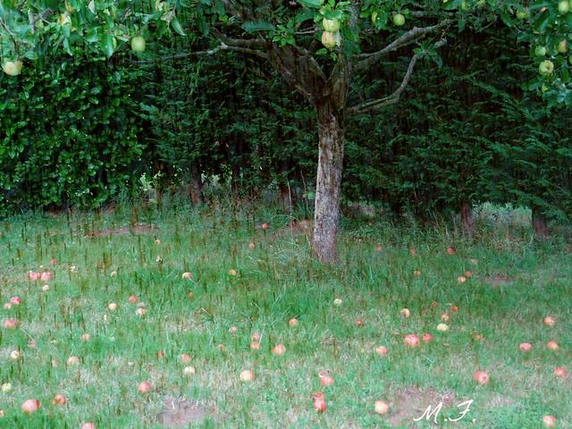 arbre à pommes