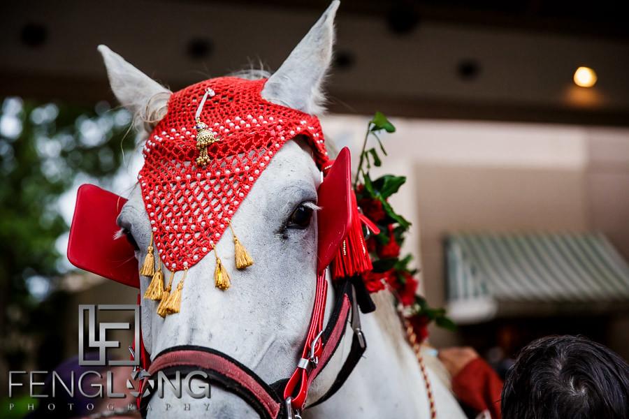 Horse for Baraat at Sonesta Gwinnett Place