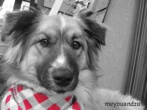 ZuZu and her red bandana