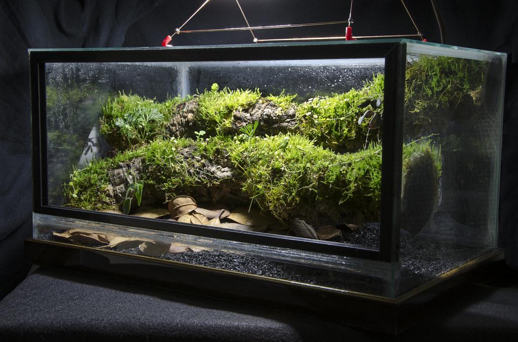 Glass Boxes – Page 2 – One man's exploration of aquariums ... 10 Gallon Vivarium