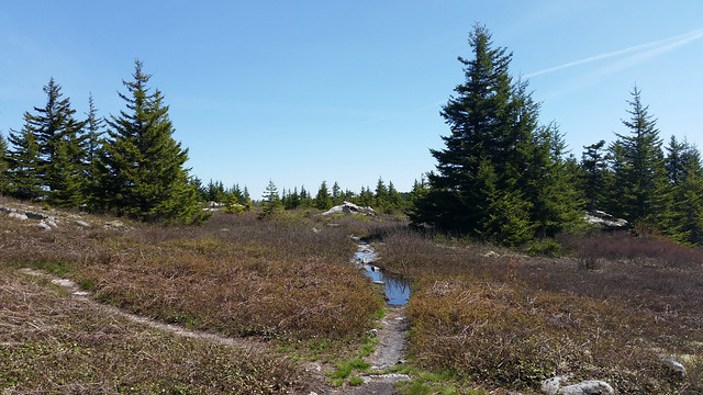 20160508_Dolly Sods_019