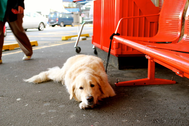 Monday: puppy at the market
