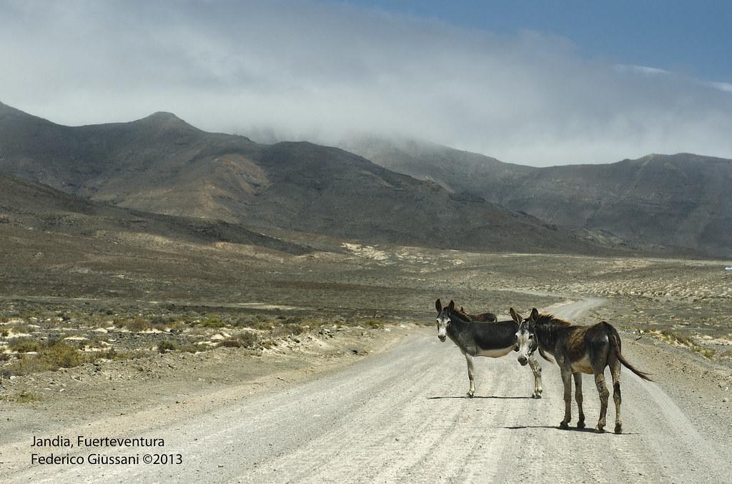 Parco naturale di Jandia, Fuerteventura