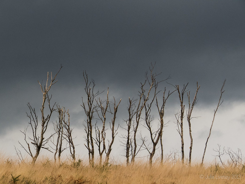 Burnt trees against a stormy sky
