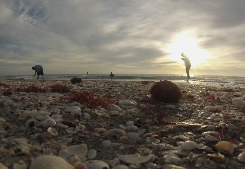 Beachcombers, a Gull and Sea Urchin on Englewood Beach, Fla., Jan. 25, 2015