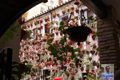 Flores en patio de Córdoba