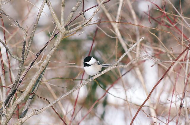Birding / Beaver Marsh