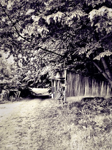 Waiting in the shed by SpatzMe