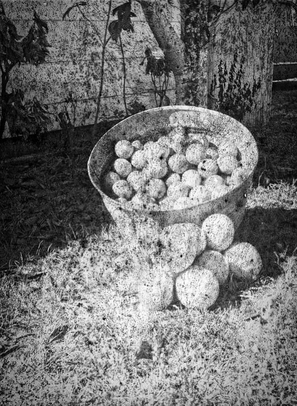 Found Film: Tri-X Pan with Fungus