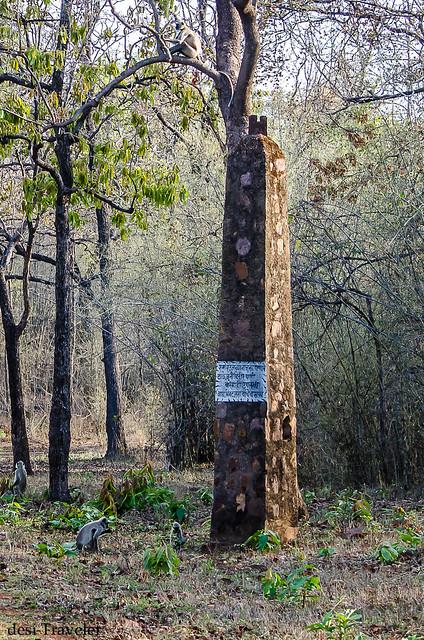 Pillar of Tadoba Tiger Reserve