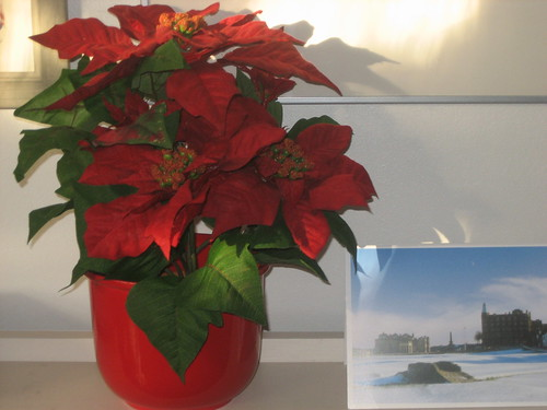Poinsettia with card