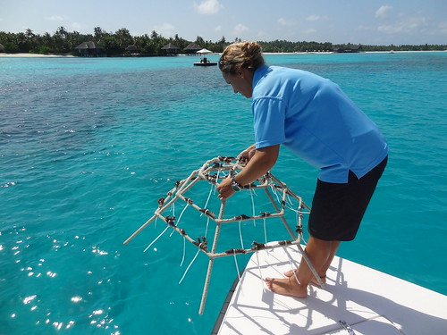Marine Biologist Zoe placing our coral reef frame in the ocean