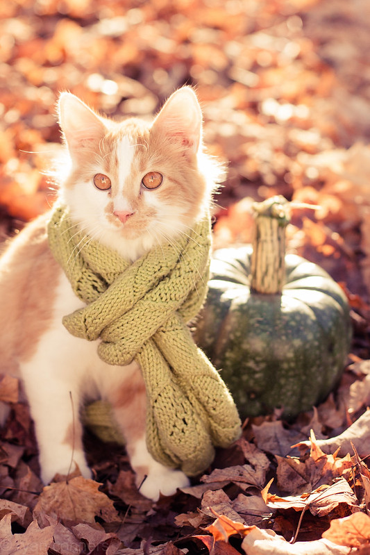 Peaches in a scarf