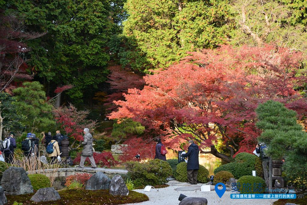 《京都赏枫景点》黑谷金戒光明寺:赏樱赏枫两相宜紫云庭园