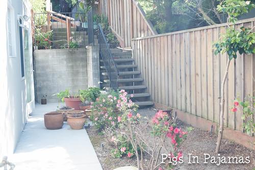 Old side yard