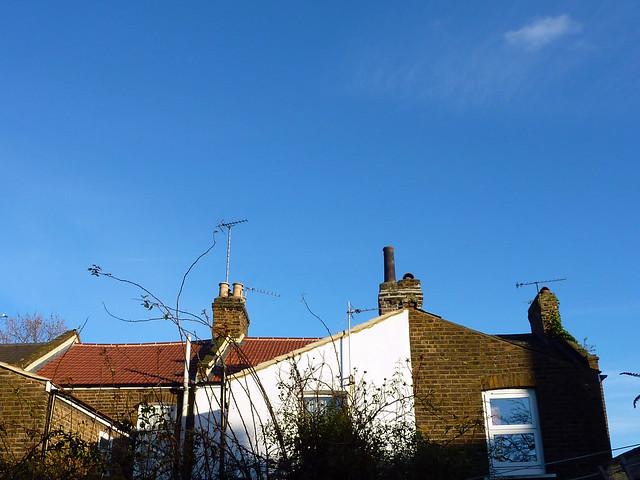 winter-sunlight-backyard