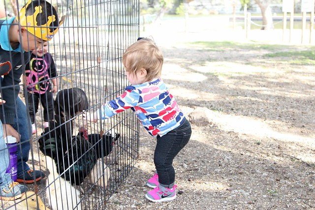 Harper petting chickens