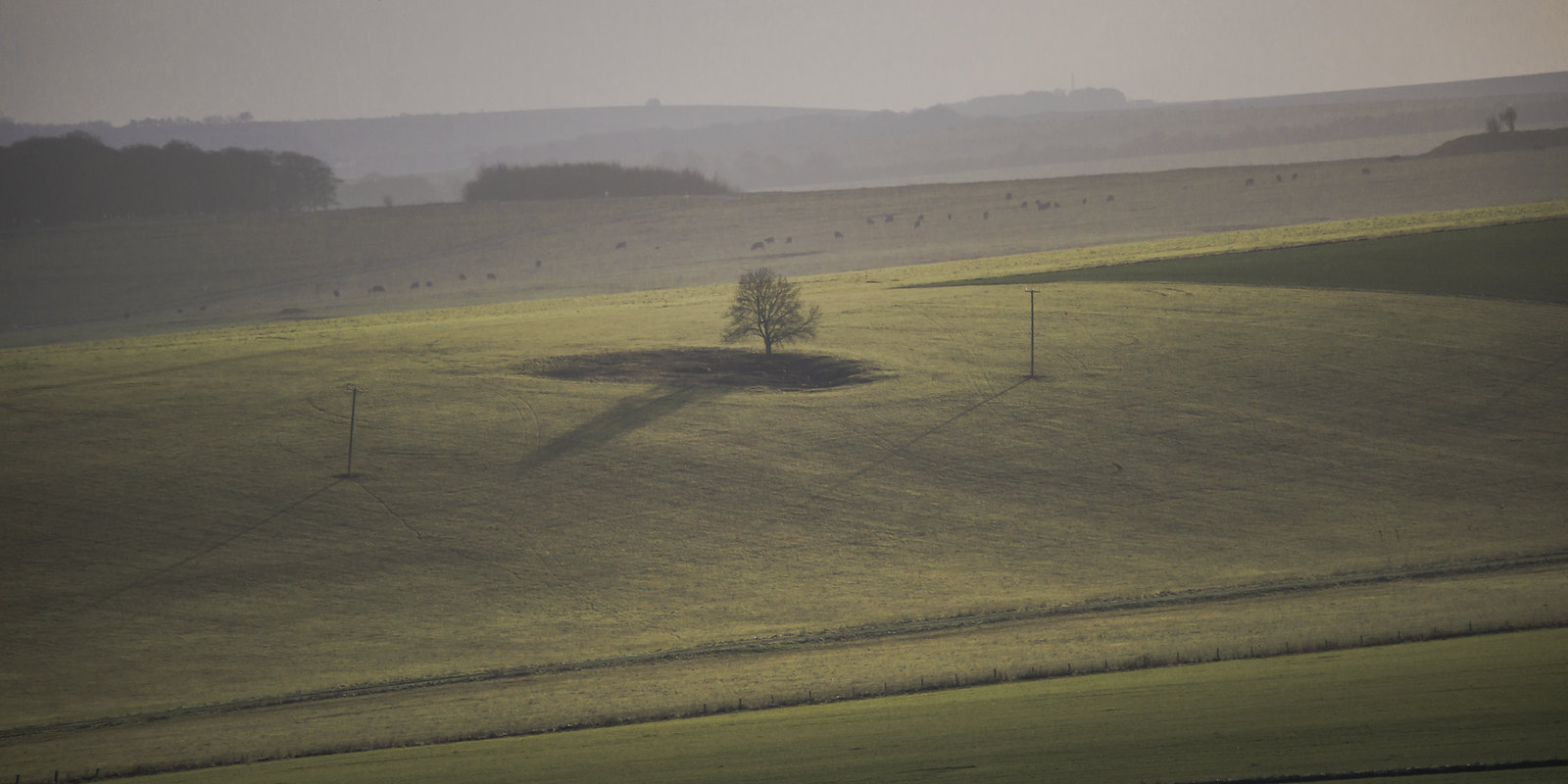 A Spring Sunset Tree Casts a Long Shadow
