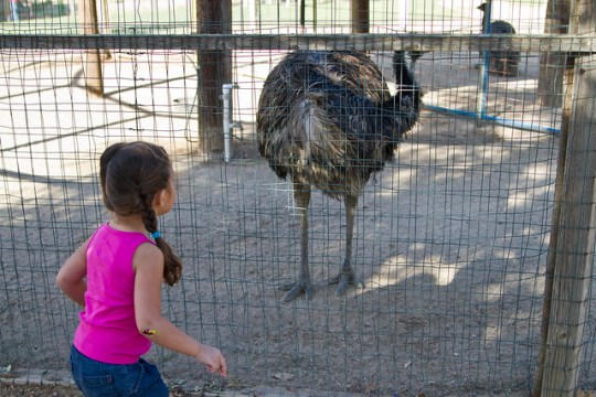 that's a biiiiiig ostrich