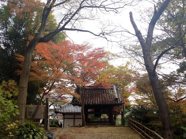 Autumn @ Nozaki Temple