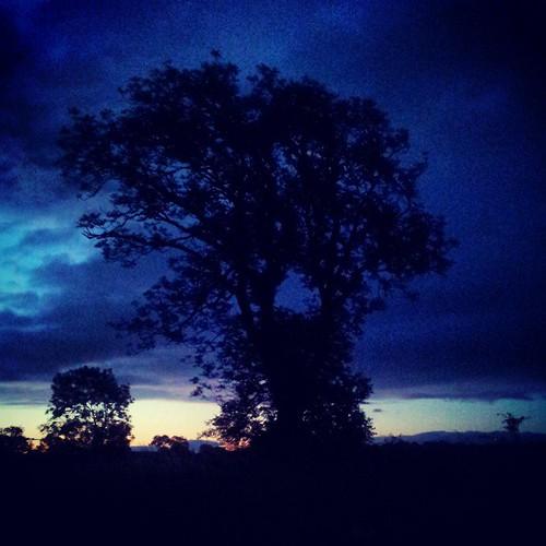Dawn tree 2