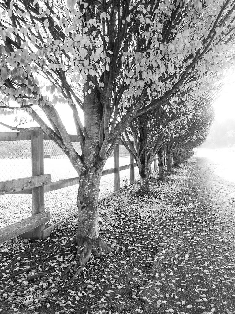 losing leaves
