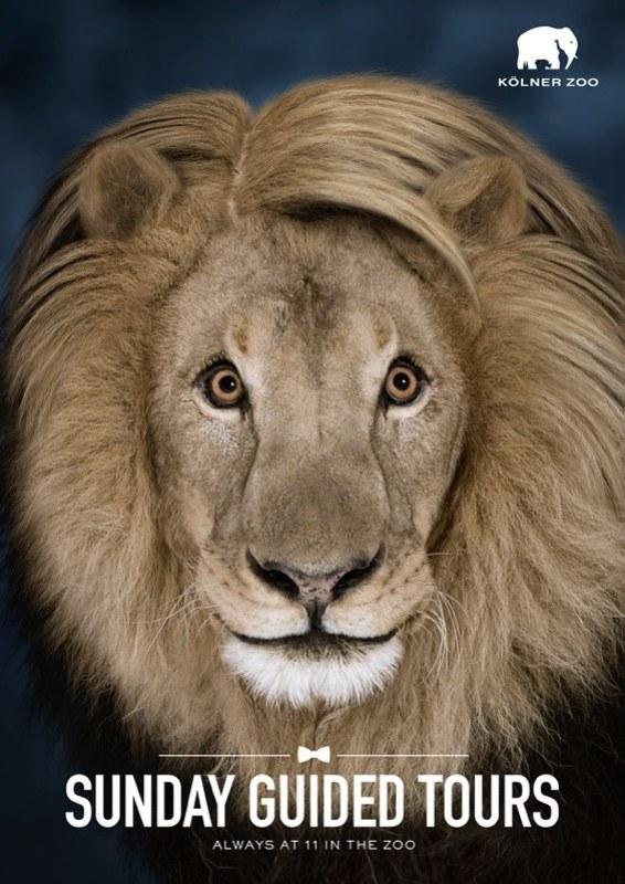 Kolner Zoo - Lion