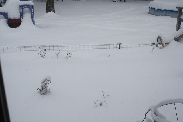 buried garden