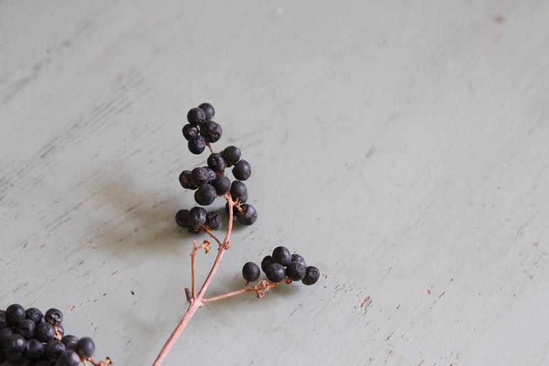 black berries 5600
