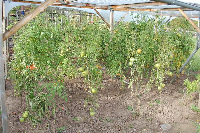 The garden in October