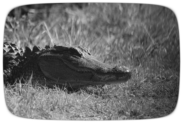Alligator B&W