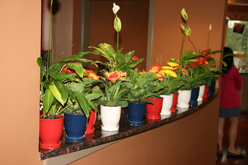 Gerbera daisies and prayer plants as party gifts