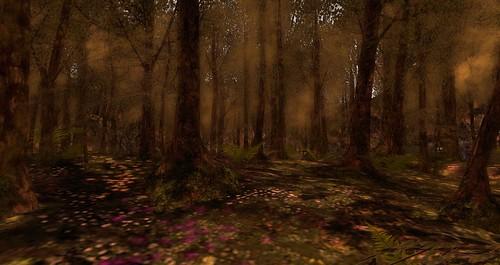 intothewoods_004