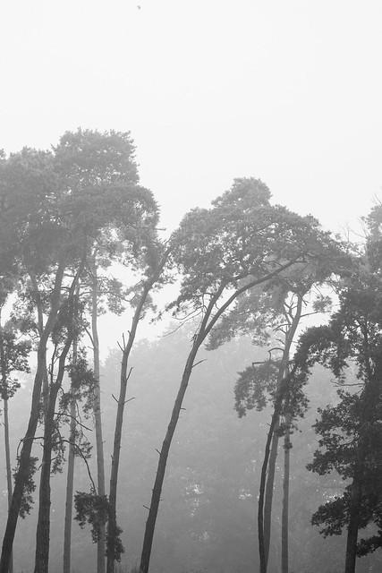 misty world