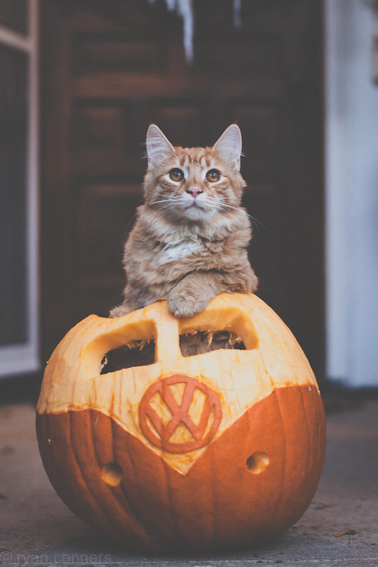 Rosie in a VW Pumpkin