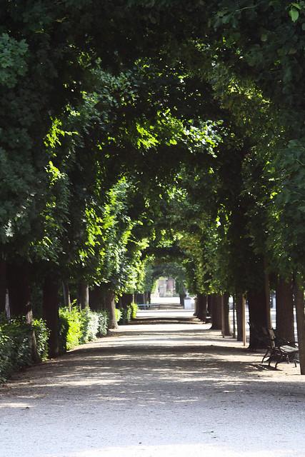 Tree arch, Schönbrunn Palace.