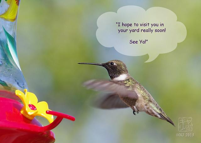 Hummingbird Dialogue 9