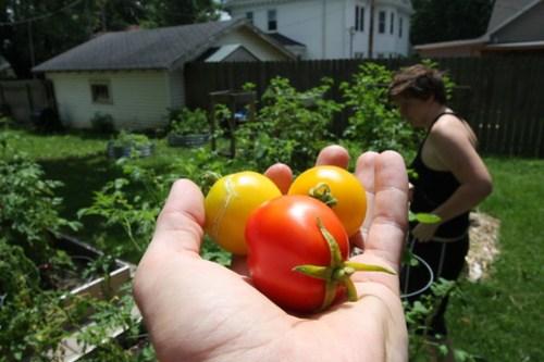 Garden Update (August 2013) 013