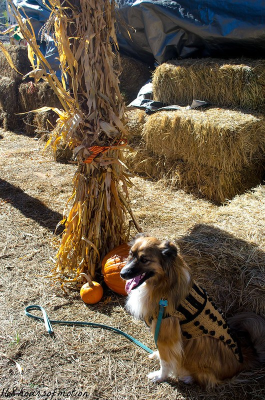 Zu at the cornstalks