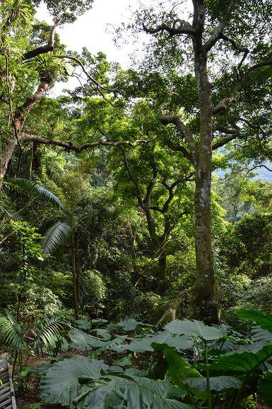 臺灣的亞馬遜雨林~~三峽.大板根森林 @ 寶小銘的天空 :: 痞客邦