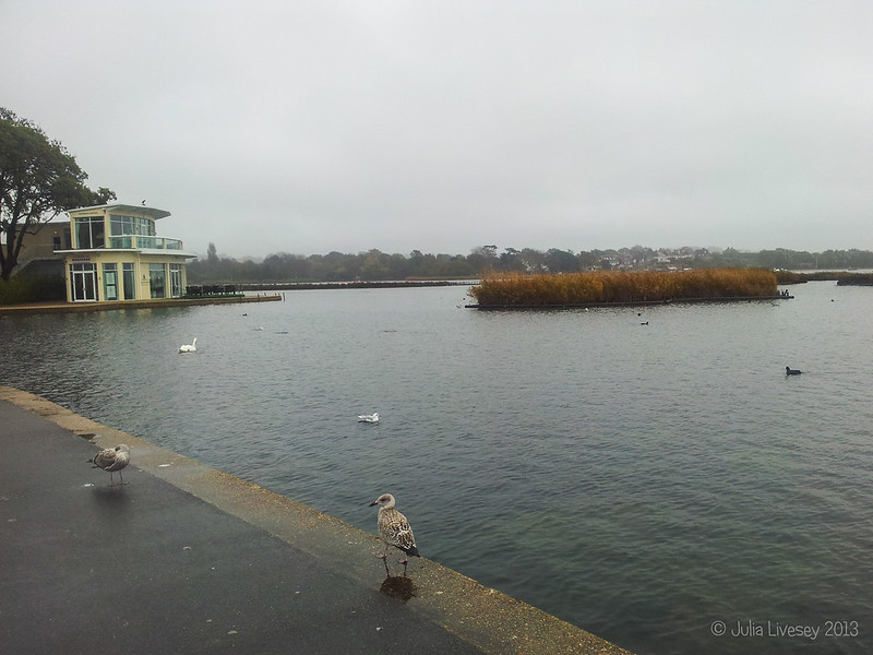 Only the birds are on the boating lake today