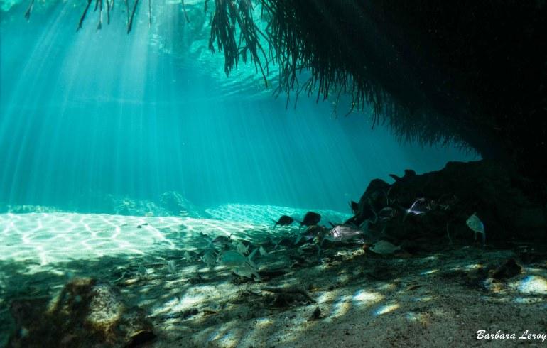 Casa Cenotes