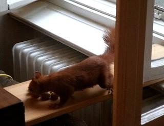 Eichhörnchen mag keine Grissinikekse 5
