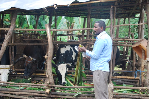 Haileluel, a dairy farmer in Arbegona district, Sidama zone