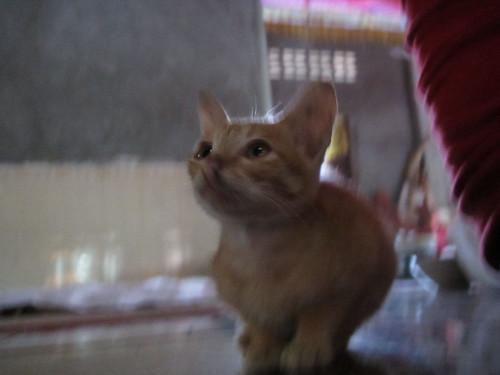 Pagoda cat