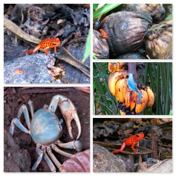 Animales en Puerto Viejo