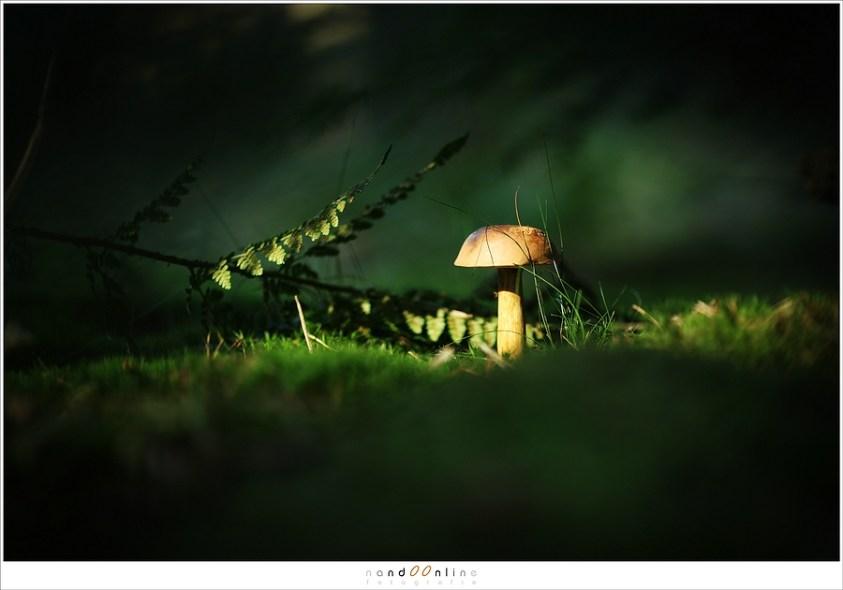 Herfstsfeer en paddenstoelen