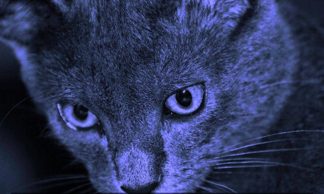 Imagen gratis de un gato en primer plano