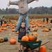 Scarecrow (Alex)