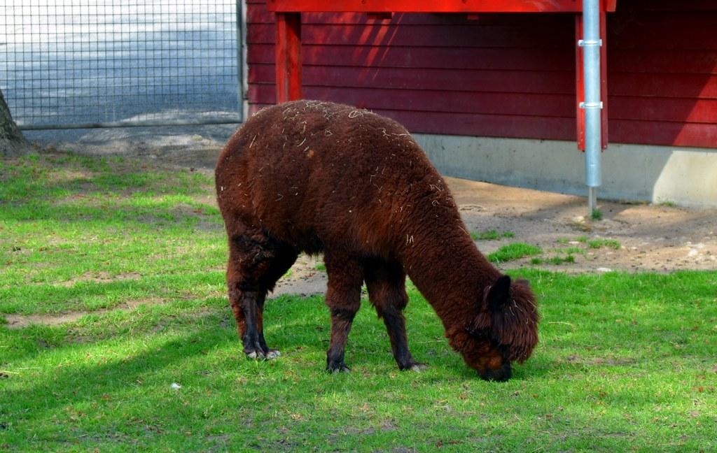 animal in switzerland